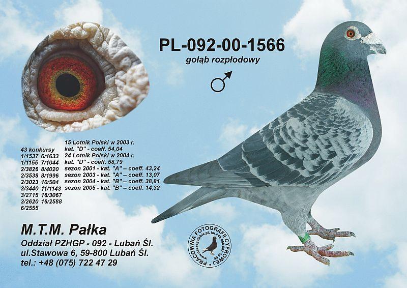 mkklos.pl/naszegolebie/hodowle/palka/pl-092-00-1566-c.jpg